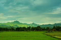 Rice Farm in Thailand Royalty Free Stock Photo