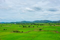 Rice farm in Thailand. Vase area of rice farm in Thailand. Mountain on the far back and cloudy sky Stock Image
