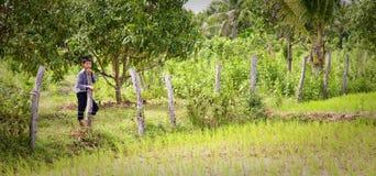 Rice farmer, Cambodia Stock Photos