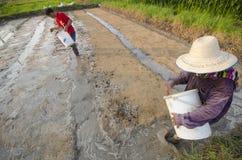 Rice Farmer Royalty Free Stock Photos