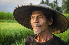 Rice Farmer Royalty Free Stock Image