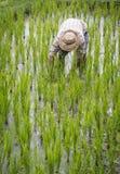Rice farmer at Jatiluwih rice paddies of Bali Stock Images