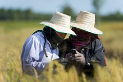 Rice farmers with mobile phone Royalty Free Stock Photo