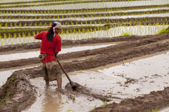 Free Rice Farmers On Rice Field On Terraced In North Thailand, Mae Ja Royalty Free Stock Photos - 88384858