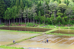 Rice farmers. Plowing marsh field misawa japan Royalty Free Stock Images