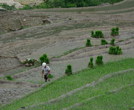Rice farmers working on rice terrace fields. A man working on rice terrace fields in Mai Chau, Vietnam Stock Photography