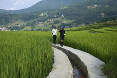 Rice Farmers Stock Image