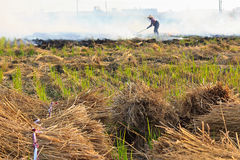 Rice farming in Taiwan Stock Photography
