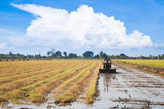 Rice farming. In Thailand with tractor Royalty Free Stock Photo