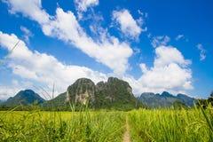 Rice farming ,Vangvieng ,Laos Stock Image
