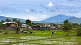 The rice farms Royalty Free Stock Photo