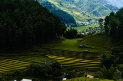 Rice fiel in the mountainous town Royalty Free Stock Image