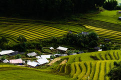Rice field in the mountainous town Stock Images