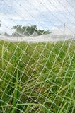 Rice field. With net cover Royalty Free Stock Image