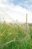 Rice field. With net cover Royalty Free Stock Photo