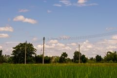 Rice field. The verdancy of rice field stock photo