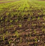 crop field Stock Photos