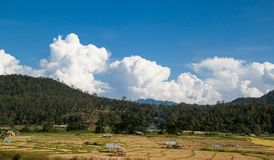 Rice field. Panorama of the paddy rice field. Thailand Stock Photos
