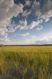 Rice field. At ribatejo, portugal Royalty Free Stock Images
