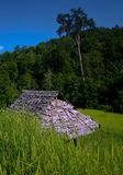 Rice field. In thailand near chiang mai with famer cottage Royalty Free Stock Photos