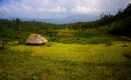 Rice field. In the northern thailand with farmer hut Royalty Free Stock Images