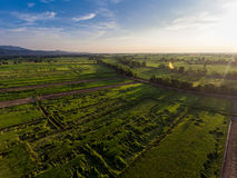 Rice Field Aerial View. In Thailand Royalty Free Stock Images