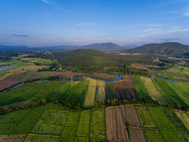 Rice Field Aerial View. In Thailand Royalty Free Stock Photo