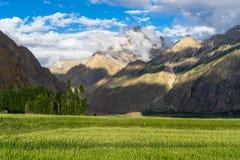Rice field in Askole village in summer, K2 trek, Gilgit, Pakistan