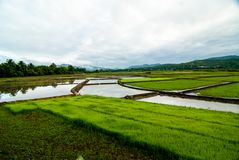 Rice field Autumn view natural background Stock Photo