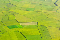 Rice field in Bac Son, Vietnam Royalty Free Stock Image