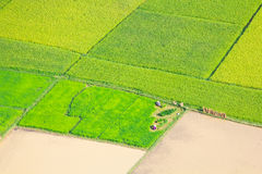 Rice field in Bac Son, Vietnam Royalty Free Stock Photo