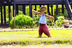 Rice field background with scarecrow or straw-man. Made to copy man, signal of guard of the fields in Thailand, Asian Stock Photos