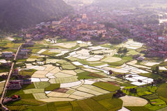 Rice field in Bacson Valley in Vietnam Stock Images
