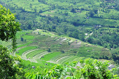 Rice field in bali. Near sidemen Royalty Free Stock Photography