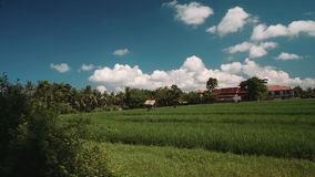 Rice field in Bali with houses in background. Green terraced rice field with small shed bordered by trees and white houses with orange tile roof. Shot with Sony stock video