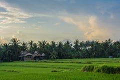 Rice field in Bali, Indonesia. Rice field in Bali in Indonesia stock image