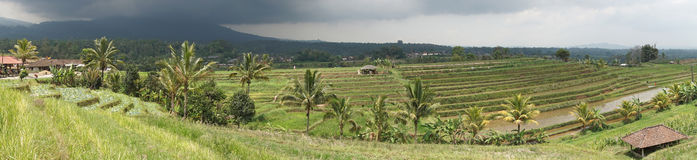 Rice field, Bali, Indonesia Stock Image