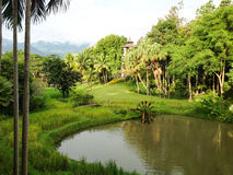 Rice field with bamboo water wheel ,Thailand Royalty Free Stock Photography