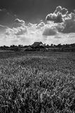 Rice field black and white Stock Photography