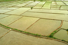 Rice field blocks. This is a typical Asian landscape Royalty Free Stock Image