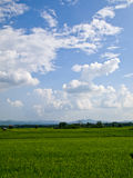Rice field with blue sky Stock Photos