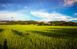 Rice field with blue sky, beautiful landscape in Lamphun Thailan Royalty Free Stock Photography