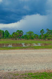 Rice field and blue sky from Cambodia Royalty Free Stock Image