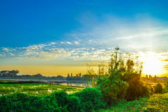 Rice field, blue sky, cloud and sun at twilight Royalty Free Stock Image