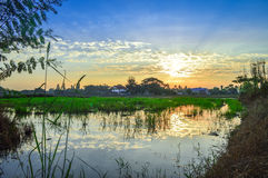 Rice field, blue sky, cloud and sun at twilight Royalty Free Stock Photos