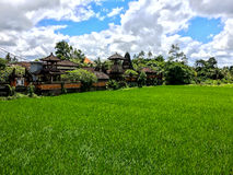 Rice Field with Blue Sky Near Bali Temple Stock Image
