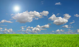 Rice field blue sky and sunny. Stock Photography