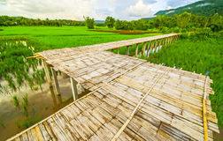 Rice field. And Bridge inThailand Stock Images