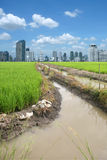Rice field buildings Royalty Free Stock Images