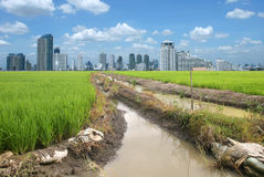 Rice field buildings Stock Photo